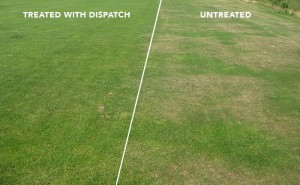 DISPATCH Sprayable - Wetting Agent
